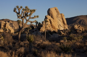 Joshua Tree overview
